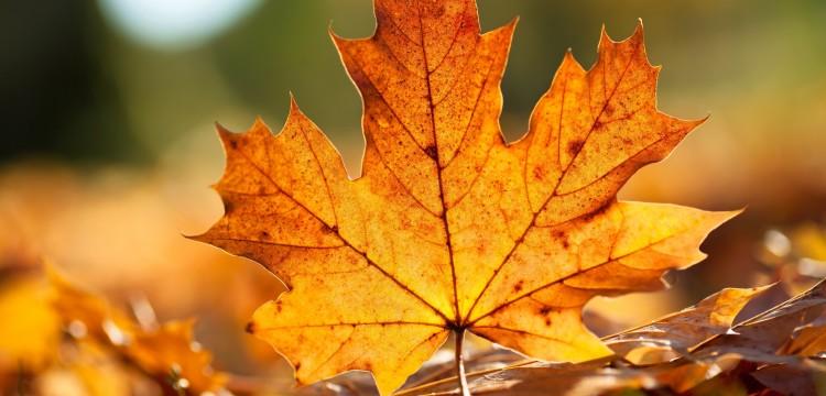 Zašto volimo jesen i šta će nas grejati ove zime?